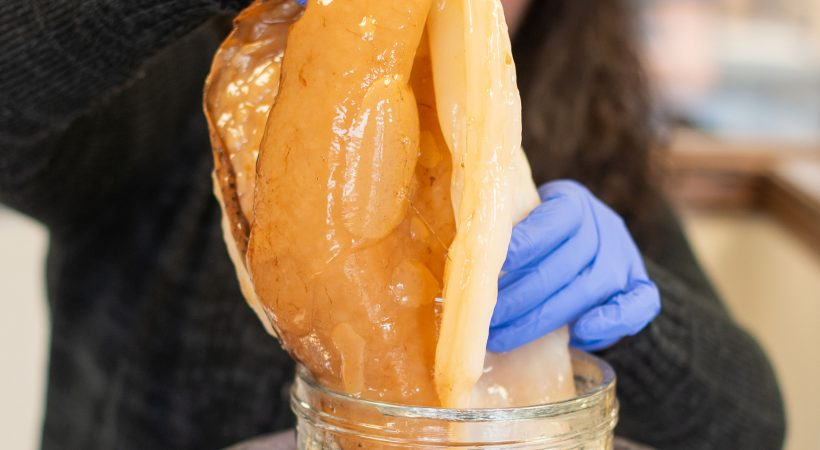 Let's Learn About SCOBY | Nadia La Russa